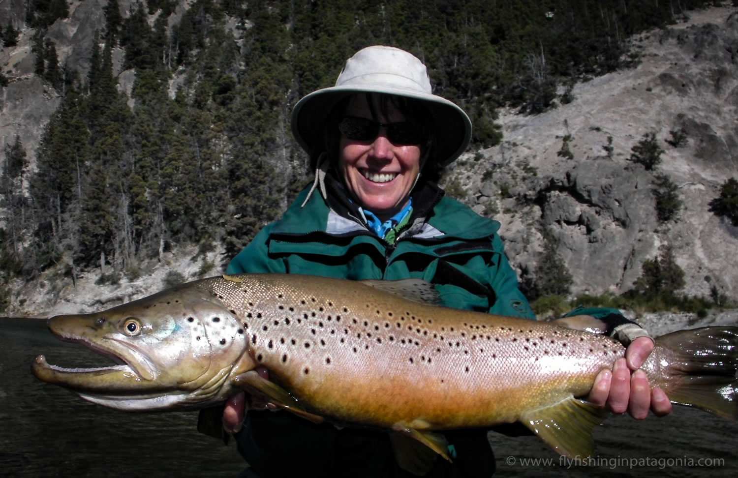 a huge trophy brown trout